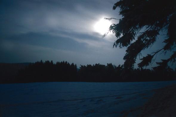 Winter-Abend-Wald_Licht_up